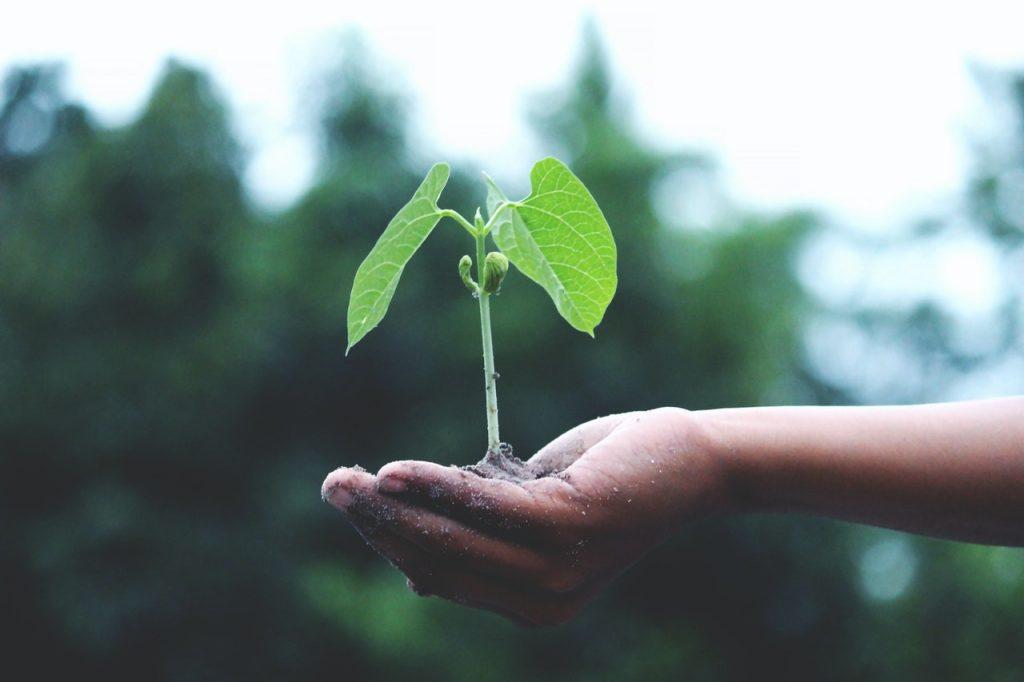 10 manières de réduire son empreinte écologique